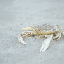 Don't Be Crabby by Shaina Jordan - Animals Sea Creatures ( pinch, sand, summer, beach, crab )