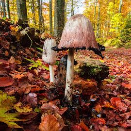 Fall mashrooms by Stanislav Horacek - Nature Up Close Mushrooms & Fungi