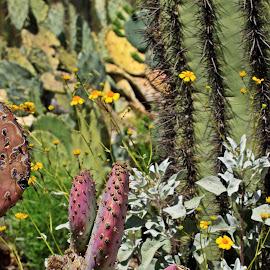 Hearts Alive by Deb Bulger - Landscapes Deserts ( nature, desert landscape, cactus, wild flowers, saguaro )