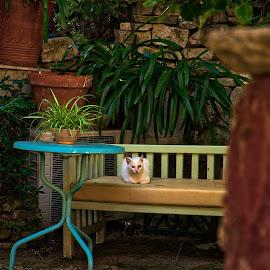 by Nikos Diavatis - Animals - Cats Portraits