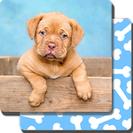 Puppy Games Kids - Cool Puppies for Cool Kids Icon