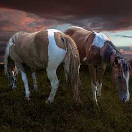 2CV by Damir Rabar - Animals Horses