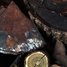 Rings And Wedges by Jon Ablicki - Nature Up Close Other Natural Objects ( stacked, wood, colors, bark, pile, rings, round, natural )