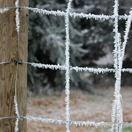 Frosty Fence by Ernie Kasper - Artistic Objects Other Objects ( fence, post, canada, cold, nature, wood, wire, ice, outdoors, frost, evergreen )
