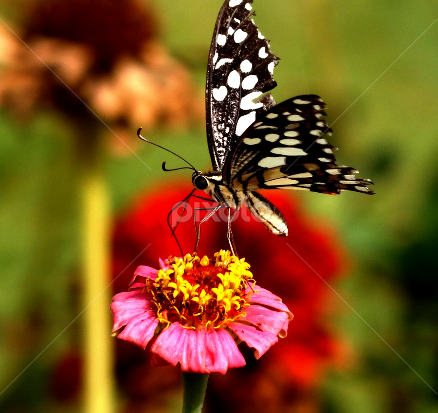 by Nani Garu - Animals Insects & Spiders ( pwcredscapes )