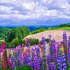 Panoramic Flower Gardens Shikisai-no-oka  by Crispin Lee - Landscapes Prairies, Meadows & Fields