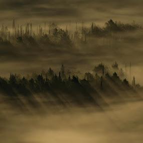 by Miho Kulušić - Landscapes Forests ( fog, hils, sinrise, forest, morning, konavle,  )
