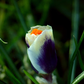 by Ramona Cristian - Nature Up Close Gardens & Produce (  )