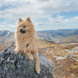 wee dog in a scottish landscape by Michael  M Sweeney - Animals - Dogs Portraits ( scotland, d800, scottish, puppy, michael m sweeney, nikon, dog, hugo )