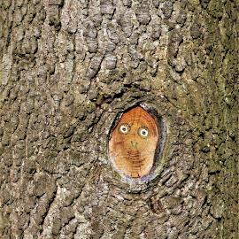 Tree with face ) by Svetlana Saenkova - Nature Up Close Trees & Bushes ( tree face, humour,  )