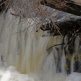 Spring in Forest Canyon by Marko Ginsberg - Nature Up Close Water ( stream, small waterfall )