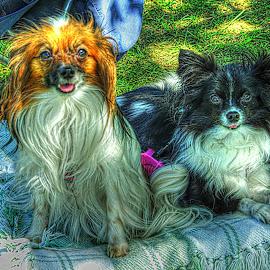 by Karen McKenzie McAdoo - Animals - Dogs Portraits