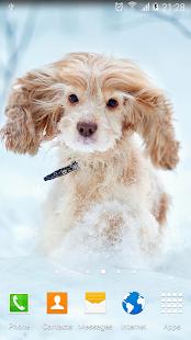 App Cute Puppies Live Wallpaper APK for Kindle
