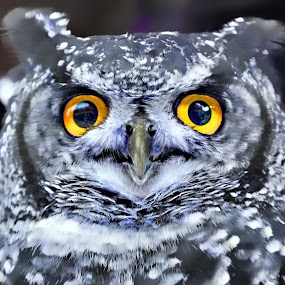Hoo are you looking at by Natalie Houlding - Animals Birds