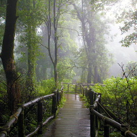 Mystic Forest Walkway by Coleman Smith - Landscapes Forests ( scary, mystic, foggy, dark, thailand, walkway, forest, darkness )