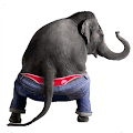 Dancing Talking Elephant APK for iPhone