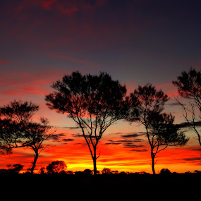 Kumarina Sunset by Steve Hatton - Landscapes Prairies, Meadows & Fields ( western australian sunset, sunset, australia, australian sunset, silhouettes, outback, outback sunset, outback sunset., western australia )