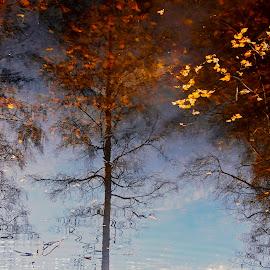Reflections. by Estislav Ploshtakov - Landscapes Waterscapes