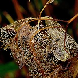 by Renata Kučan - Nature Up Close Leaves & Grasses