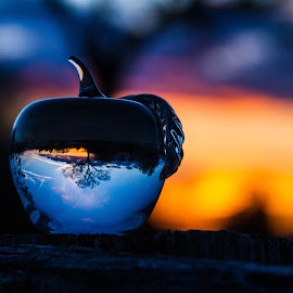 Sunset Apple Tree by Lisa Hendrix - Artistic Objects Other Objects ( reflection, tree, color, apple, sunset, sun )