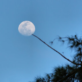 moon barbeque by Lolit Cabilis - Nature Up Close Trees & Bushes ( moon, nature, dusk )