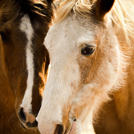 JJ and Buck by Colleen Bruso - Animals Horses (  )