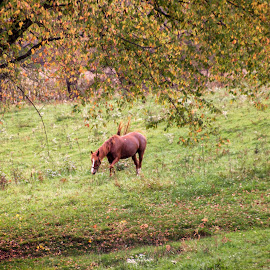 by Sue Schaller - Animals Horses (  )