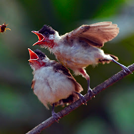 feeding time by Yadi Setiadi - Animals Birds