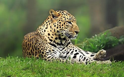 by Gesit Pinanjaya - Animals Other Mammals