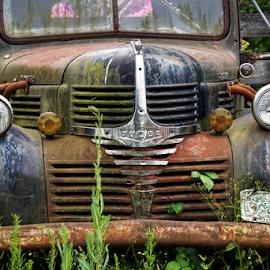 Dodge  by Todd Reynolds - Transportation Automobiles