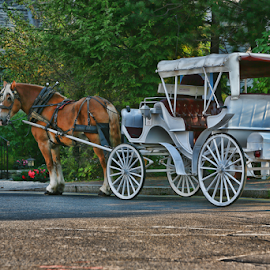 Sit-n-Idle by Gary Enloe - Transportation Other ( buggy, maine, carrige, horse, wagon, transportation )