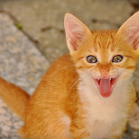 by Booba Booba - Animals - Cats Portraits