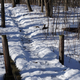 by Kathy Kehl - Landscapes Forests ( snow, foot path, forest, bridge, woods )
