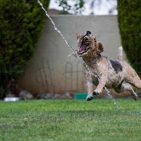 Land Jaws! by Nardus Taljard - Animals - Dogs Playing ( water, wet dog, dog playing, dog, dog fun )