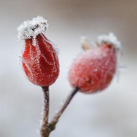 by Anngunn Dårflot - Nature Up Close Other plants
