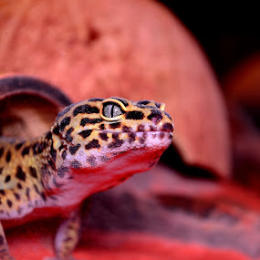 Coming out of hiding by Jimmy Tuazon - Animals Reptiles