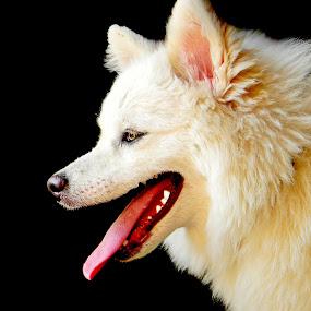 Cuty by Avishek Mazumder - Animals - Dogs Portraits