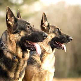 Aengus & Annabel by Jennifer Cessna - Animals - Dogs Portraits