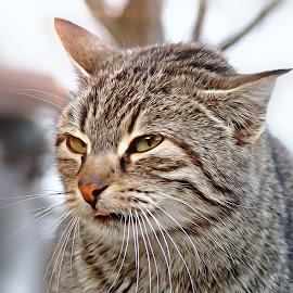 by Ksenija Glavak - Animals - Cats Portraits