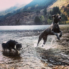 by Briony Bruce - Animals - Dogs Playing
