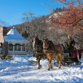 Winter Sleigh Ride,Nestlenook Farm by Peter Miller - Landscapes Mountains & Hills