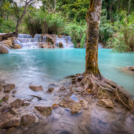 Paradise In The Forest by René Ehrhardt - Landscapes Forests ( water, stream, laos, flowing, roots, kuang si falls, trees, cascading, travel, luang prabang, south-east-asia, swimming )