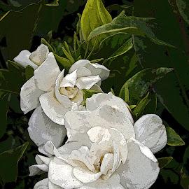 Gardenia by Ingrid Anderson-Riley - Digital Art Things