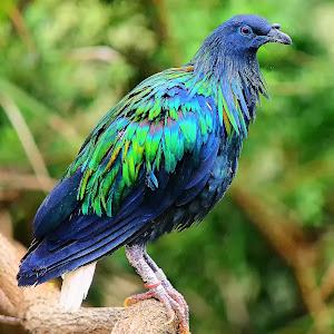 L'Oiseau bleu.jpg