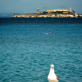 Alcatraz Jail by Alex  Wolf - Landscapes Travel ( water, pigeon, old, colorful, california, pacific, alcatraz, ocean, jail, prision, alex wolf, seagull, wolfproduction.us, bay, histric, san francisco )