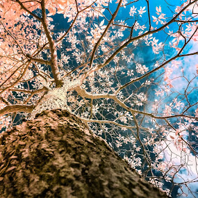 Infrared  by Reeve Lim - Nature Up Close Trees & Bushes