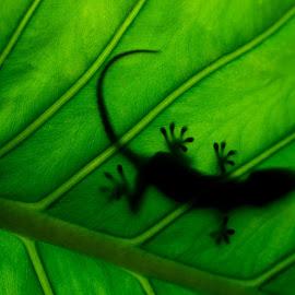 by Nuno Firmino - Animals Reptiles
