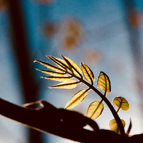 New leaves by Pamela Zeng - Nature Up Close Leaves & Grasses