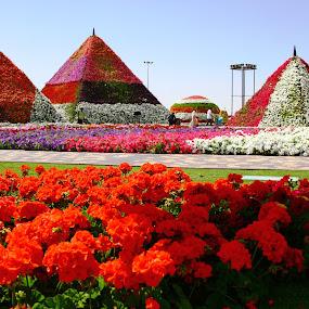 MIRACLE GARDEN-DUBAI by Syam Alendu Nair - Travel Locations Landmarks