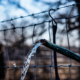 someone left a hose on by Jason Lockhart - Landscapes Prairies, Meadows & Fields ( field, water, wisconsin, fence, hose, barbed wire, jefferson county )